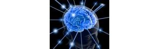 cerveau-memoire